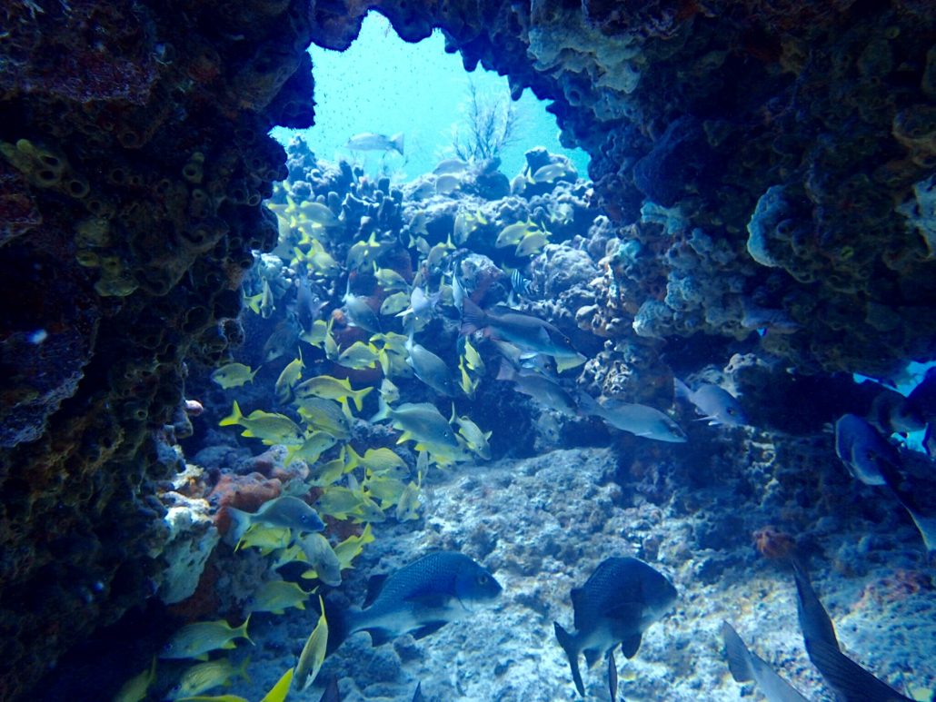 Reefs Quiescence Diving Services Inc