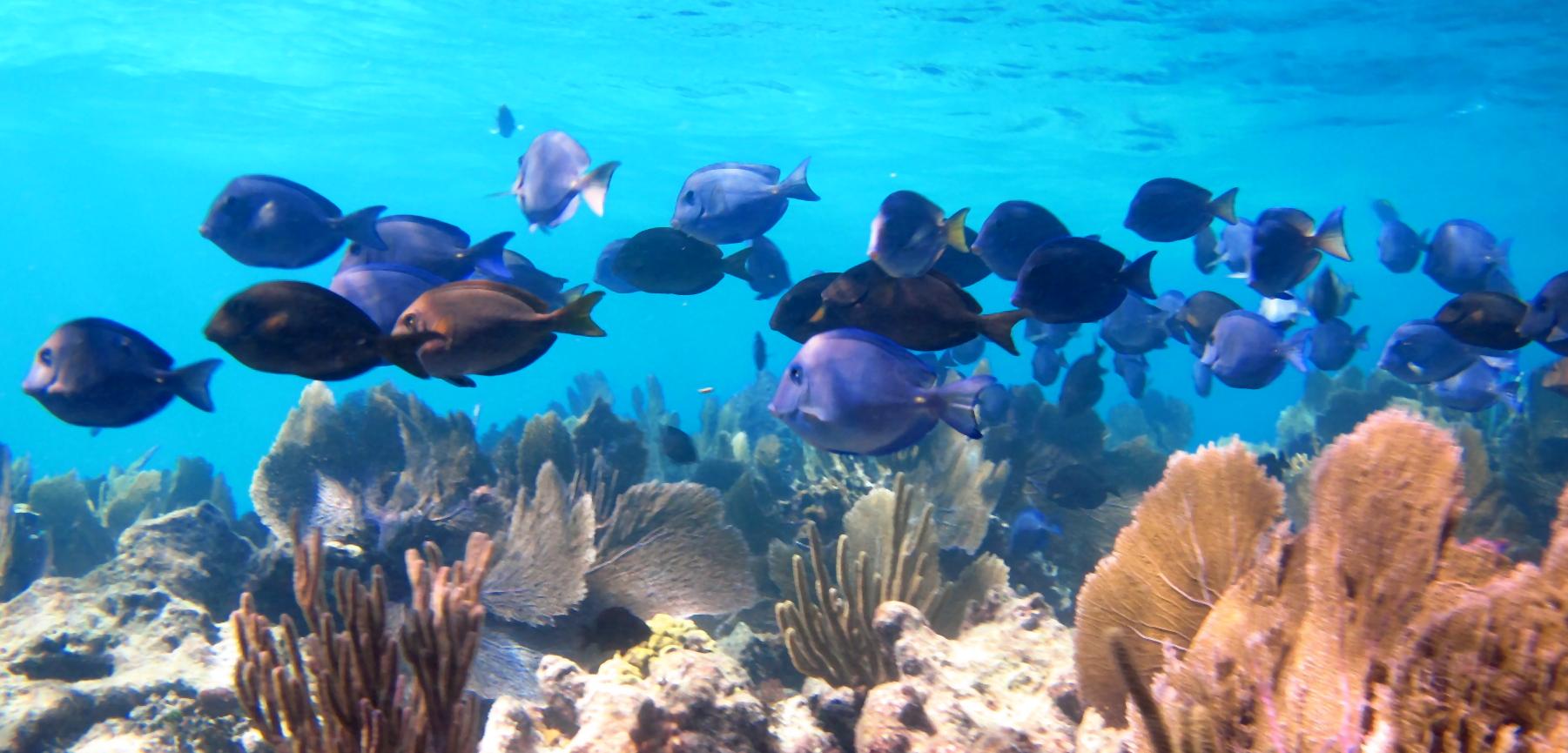 Reef Diving Key Largo