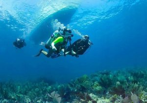 Guided Dive Key Largo