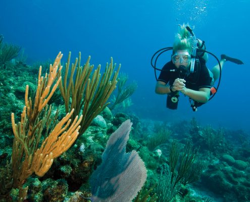 Learn to dive Key Largo
